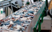 Линия для производства рыбных консервов